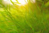 Fresh green leaves of grass under sunlight morning on blurred background