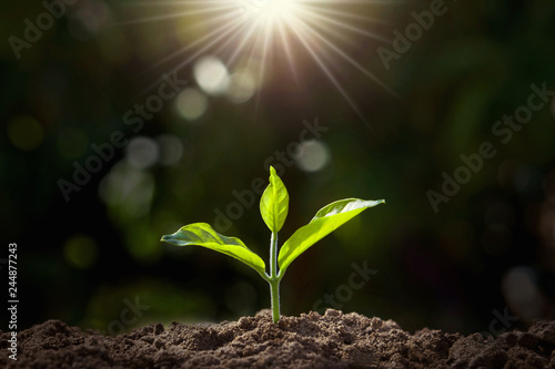 Poster Vegetal small plant growing in garden with sunlight