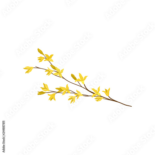 Forsythia branch with small yellow flowers Wallpaper Mural
