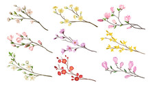 Set Of Blooming Branches Of Fr...