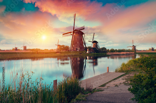 In de dag Zalm Dramatic spring scene on the tulip farm. Colorful sunset in Netherlands, Europe.