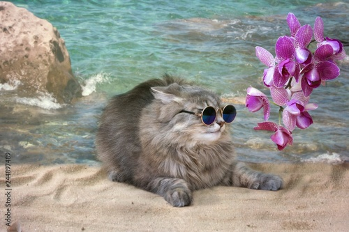 Valokuva  Pretty kitty in the sunglasses on the sea beach