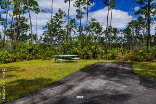 Fényképezés Long Pine Key Campground, Everglades National Park, Florida, United States