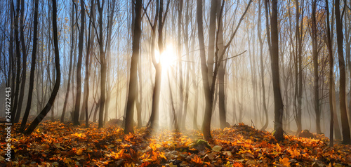 Plakaty do gabinetu forest-enchanted-by-rays-of-sunlight-in-winter-or-autumn