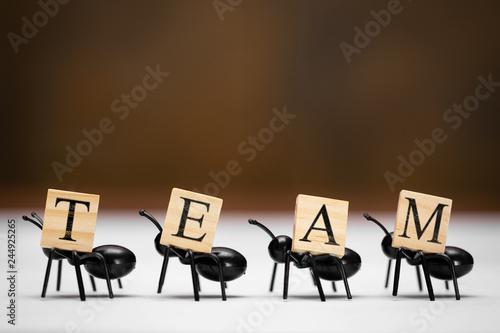 Cztery mrówki niosą litery, które tworzą zespół słów