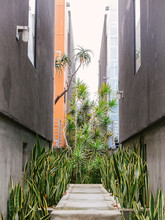 Court Yard In Venice, Los Angeles, California With All Sorts Of Tropical Plants.