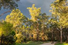 Walking Track Along The Yarra River In Warrandtye In Melbourne, Australia