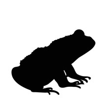 Vector Silhouette Of Frog On W...
