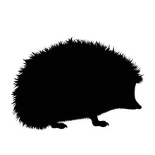 Vector Silhouette Of Hedgehog On White Background.