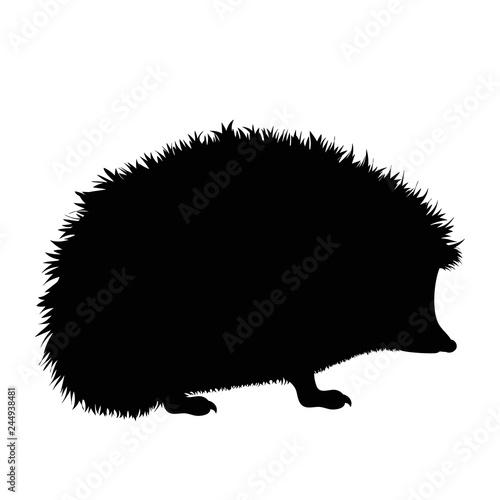 Fototapeta Vector silhouette of hedgehog on white background.