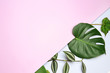 canvas print picture Composition with fresh tropical leaves on color background