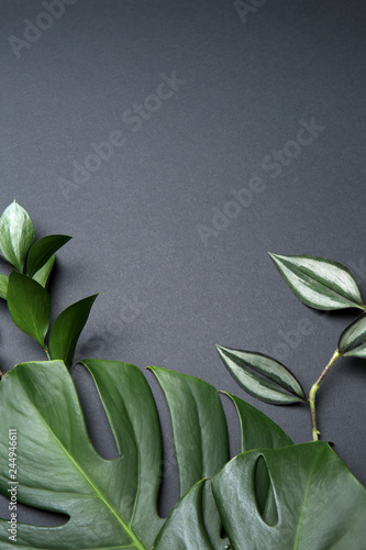Poster Fleur Fresh tropical leaves on grey background