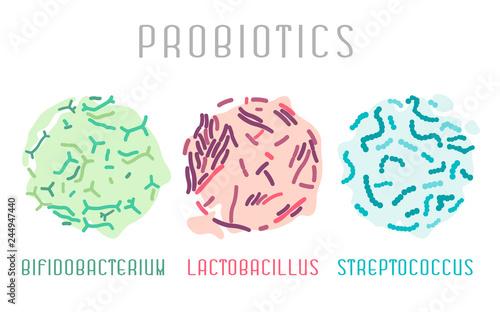 actobacillus, bifidobacterium, streptococcus Canvas Print