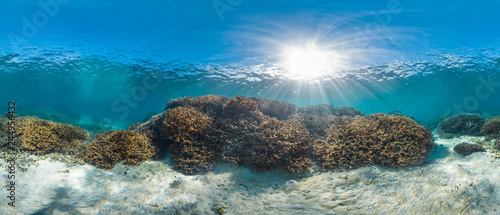 Poster Coral reefs Healthy coral reef panorama