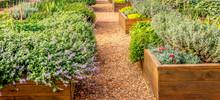 Raided Beds In An Urban Garden...