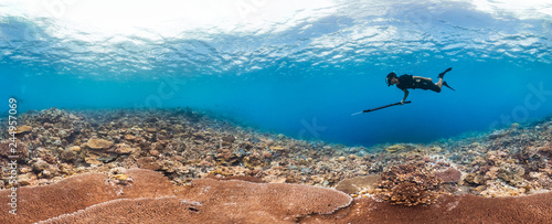Poster Coral reefs Spearfisher hunting on healthy reef