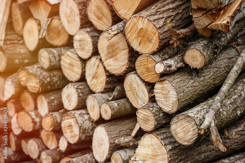 Stack of wooden logs Canvas Print