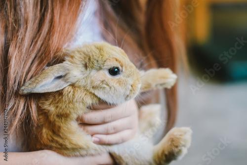 Fototapeta szczęśliwy królik