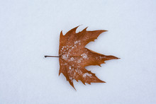 Dry Autumn Leaf Lying On The S...