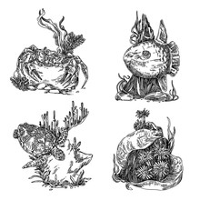 Set Of Marine Animals. Turtle, Sunfish, Moray And Crab. Sketch. Engraving Style. Vector Illustration.