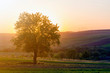 canvas print picture - Quiet and peaceful view of beautiful big green tree at sunset growing alone in spring field on distant hills bathed in orange evening sunlight and high voltage lines stretching to horizon background.