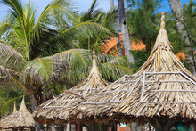 Thatch Roof And Palm Trees