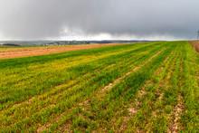 Wide Panorama Of Green Fresh W...