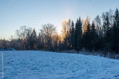Fototapeten Natur sun rising in heavy snow covered forest