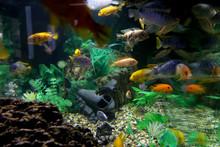 Aquarium With Beautiful, Bright Fish