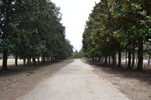 Long Gravel Driveway Lined Wit...