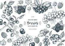 Berries Hand Drawn, Vector Ill...
