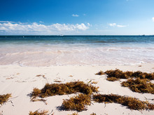 Tropical Beach With Sargassum ...