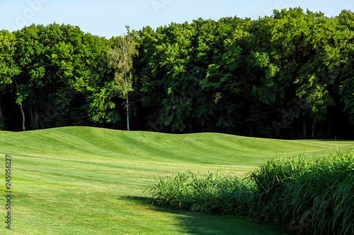 Fotografiet  meadow with lawn and undulating landscape with reeds and in the background a forest with deciduous trees