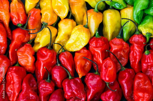 Hot peppers layered in row from red to green with a gradient Wallpaper Mural