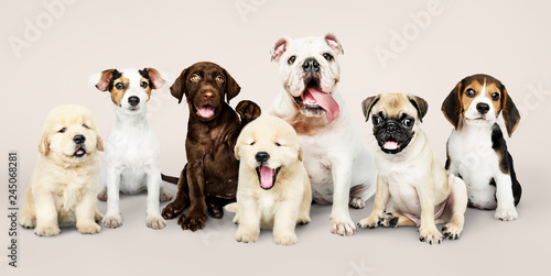Photo  Group portrait of adorable puppies
