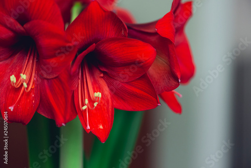 Photo bouquet of large red blooming flowers