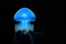 Spotted Jellyfish Swimming