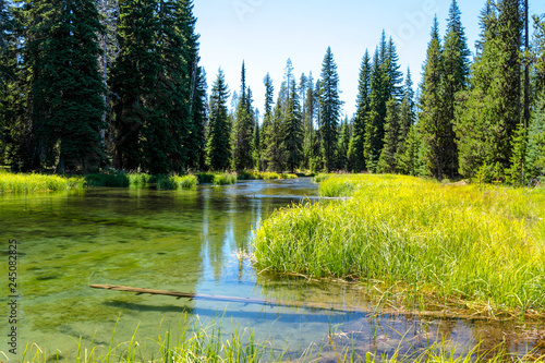 Keuken foto achterwand Meer / Vijver Scenic view of a Little Lava lake, Bend Oregon. Tall green grass, pines and transparent crystal clear water create peaceful and calm mood of a hot summer day