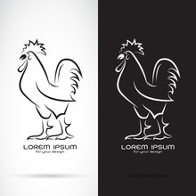 Vector Of Rooster Or Cock Desi...