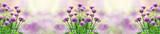 Fototapeta Kwiaty - Kwiaty czosnku | Flowers of garlic
