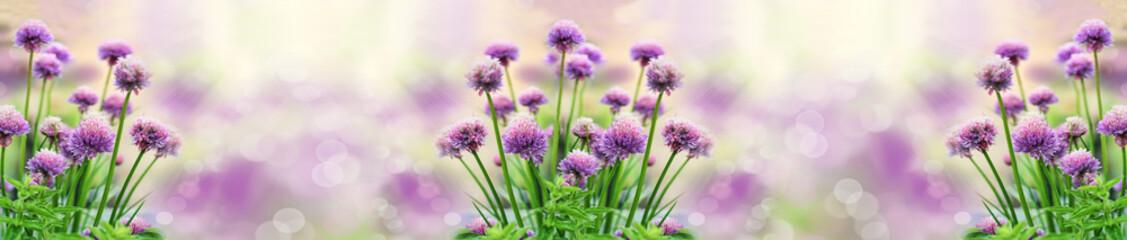 Kwiaty czosnku | Flowers of...