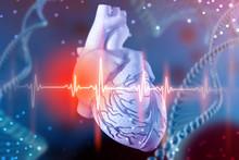 3d Illustration Of Human Heart...