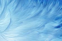 Beautiful Dark Blue Feathers Texture Background.