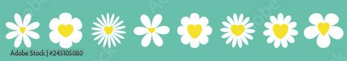 Photographie White daisy chamomile set line