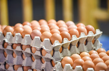 Egg In Box / Fresh Eggs Packaging On Tray From Chicken Farm