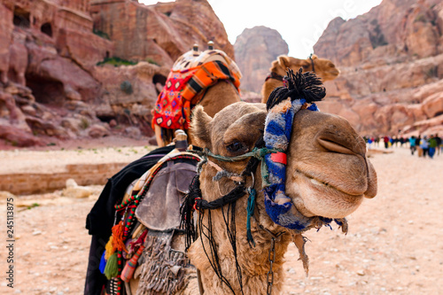 Spoed Fotobehang Kameel Close-up view of two beautiful camels in the Unesco World Heritage Site in Petra. Petra is a historical and archaeological city in southern Jordan.