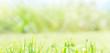 canvas print picture - Hintergrund- und Banner- Konzept Gras, Frühling, Ostern, Natur, mit Sonnenstrahlen und Bokeh