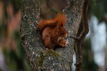 Eichhörnchen / Squirrel