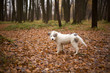 Cute puppy in the fall walks in nature. Healthy wool and healthy dog food. Pet Shop. Walk in the city park with a pet. Beauty and harmony