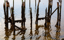 Old Wood Pilings Ruins At Wisc...